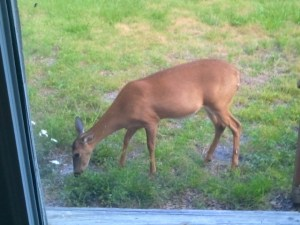 The deer by the French doors.