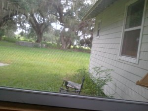 Where I sit in the front yard. It is usually shady there.