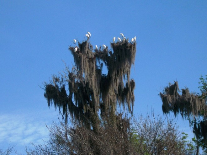 Check Out The Birds we saw coming out of Zipprer Canal