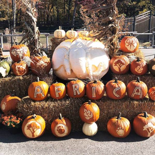 Life Is Sweet October 2019 - Carved pumpkins on display at MKE County Zoo for Halloween.