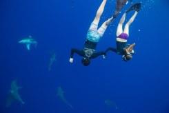 Shark dive 4 - Juan Oliphant OneOceanDiving.com