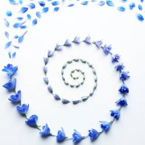 Delphinium Spiral