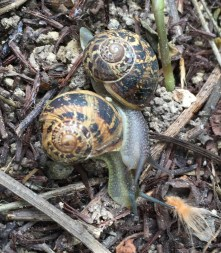 Snail buddies!