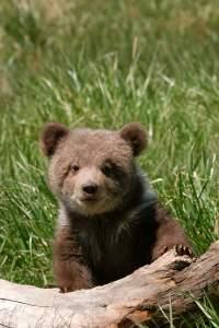 new baby bear