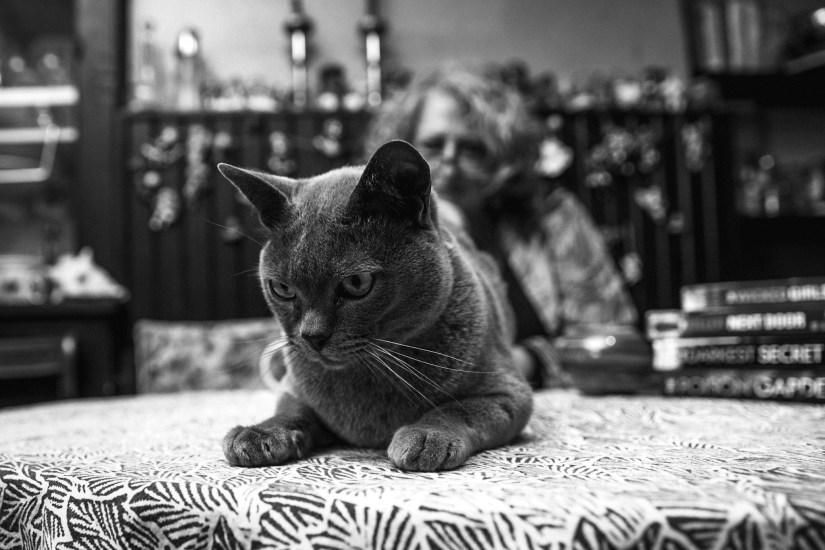 Alex Marwood's cat