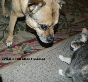Duke & Gizmoe