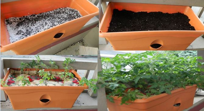 The growbox