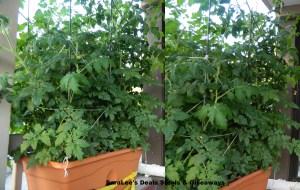 july1613 plants
