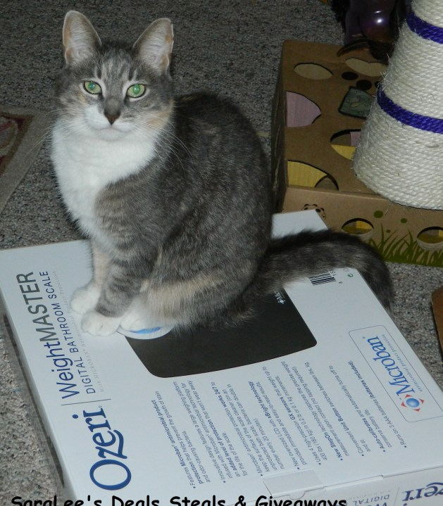 Gizzy on the scale box