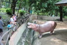 The hippos know where it's at.