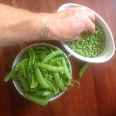 Peas, being stolen by the author's husband.