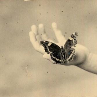 1213_butterfly