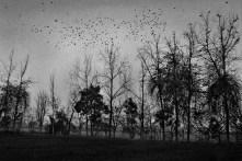 Untitled - Trees Series