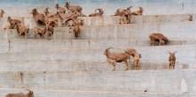Zoologischer_Garten_Madrid_I_1995