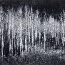 aspin-grove