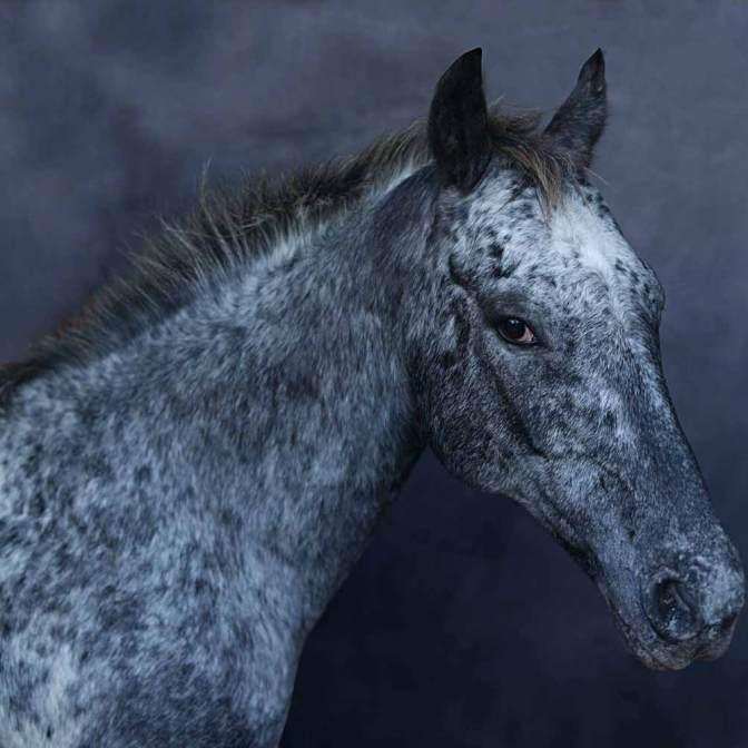 ANIMAL-KINGDOM-image-courtesy-of-Ottavia-Poli