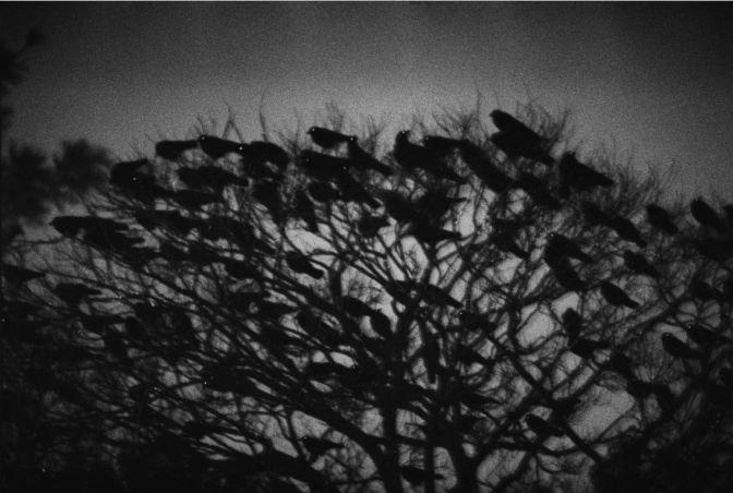 Ravens Kanazawa