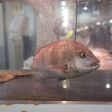 02_Tsukiji Market - Tokyo _ ASecondin (X01F3916)