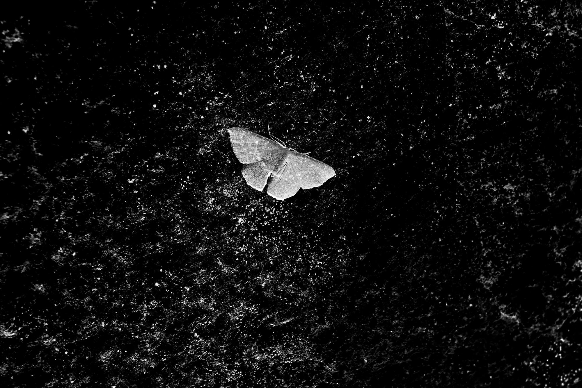 introverso che risale una farfalla sociale