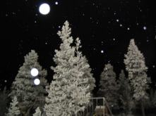 thumb_l_snowtree