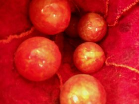 Inside - macro seeds