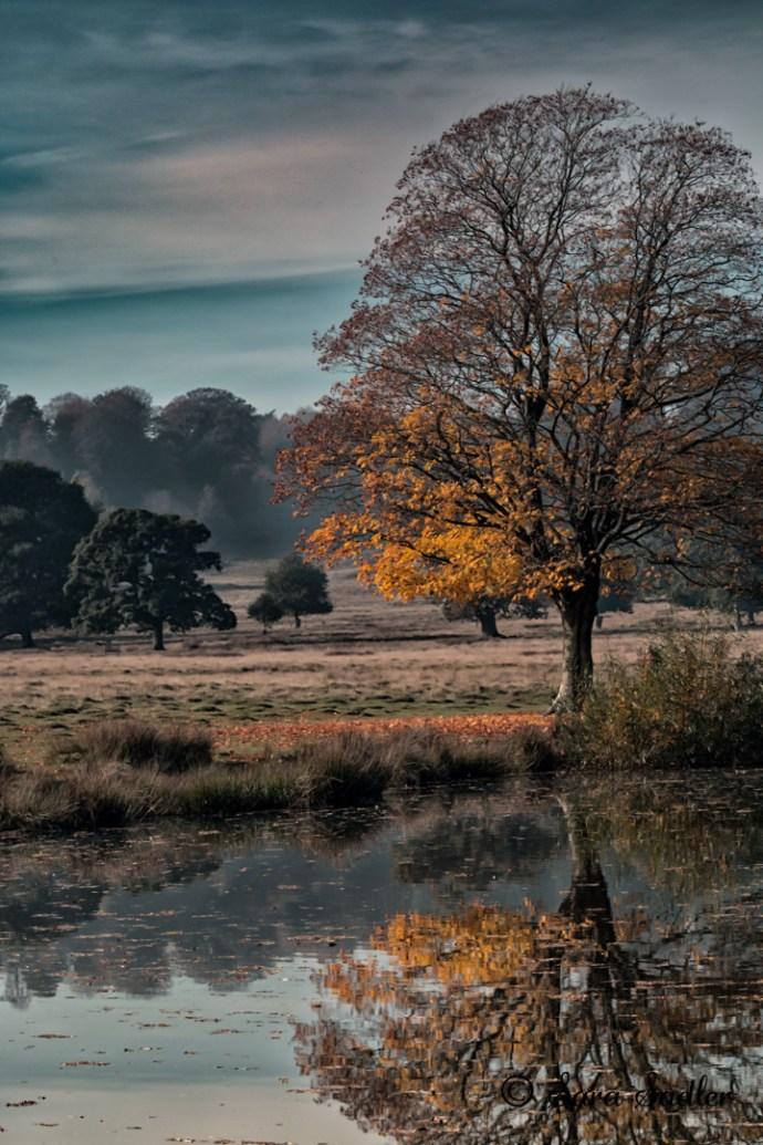 Beautiful Autumn photography