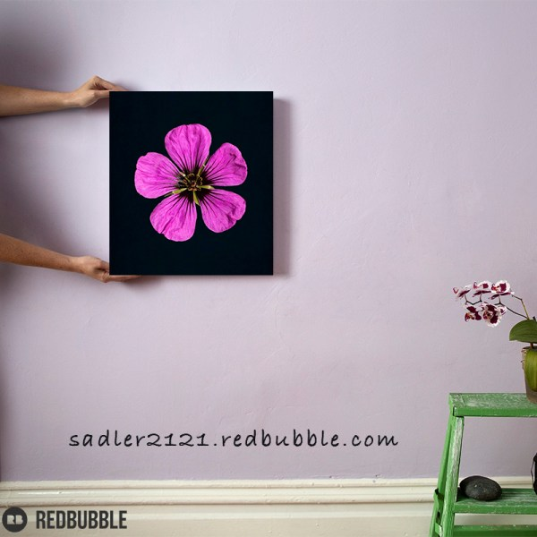 Pink Geranium canvas wall art