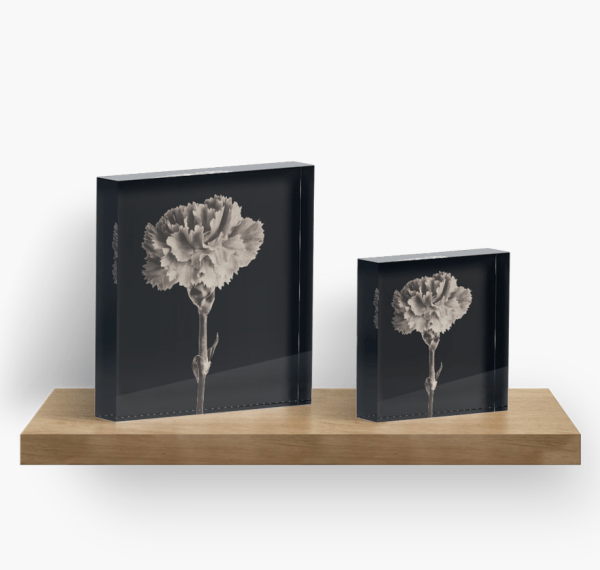sepia carnation acrylic blocks
