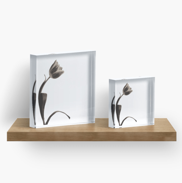sepia tulip acrylic block