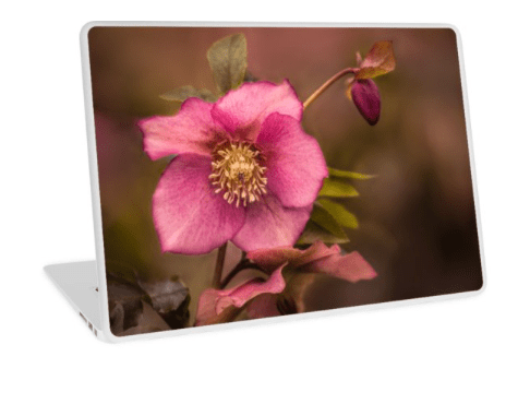 Christmas Rose Laptop Skin
