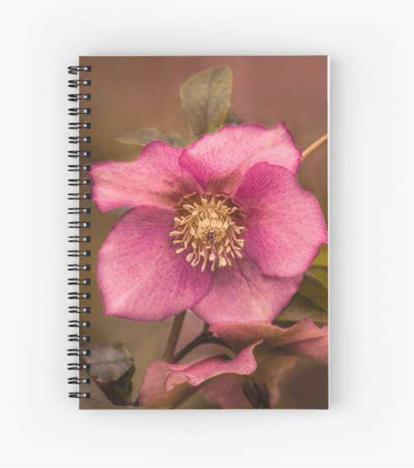 Christmas Rose notebook