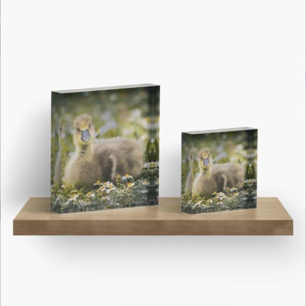 gosling acrylic block
