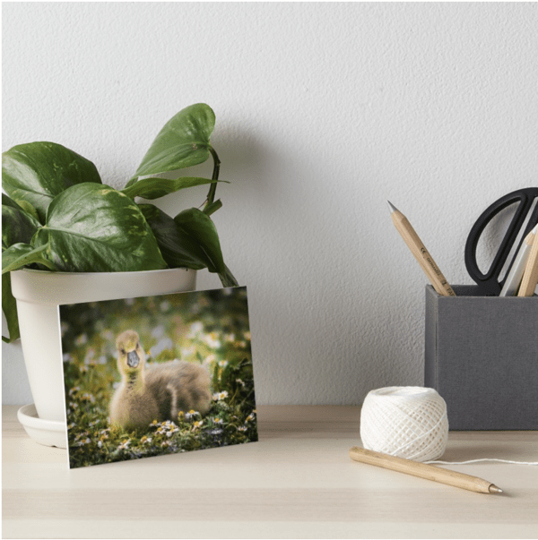 gosling artboard - display cute wall art with this baby animal print