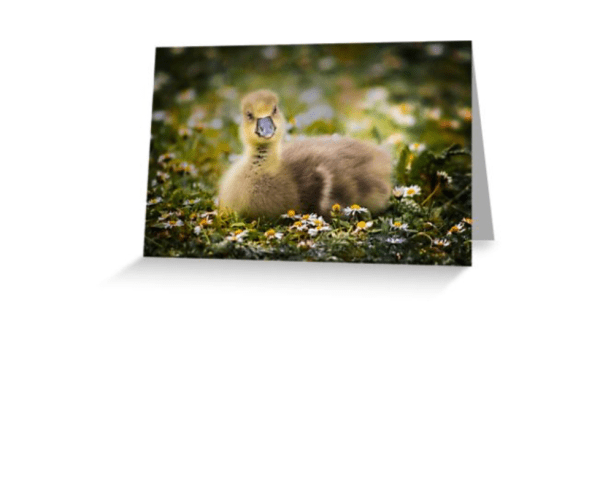 gosling greetings card for all your springtime messages