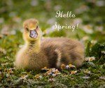 Spring photography opportunities - baby birds