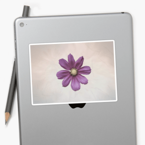 Cosmos flower stickers -medium