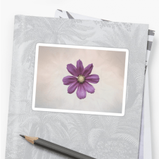 cosmos flower stickers - small