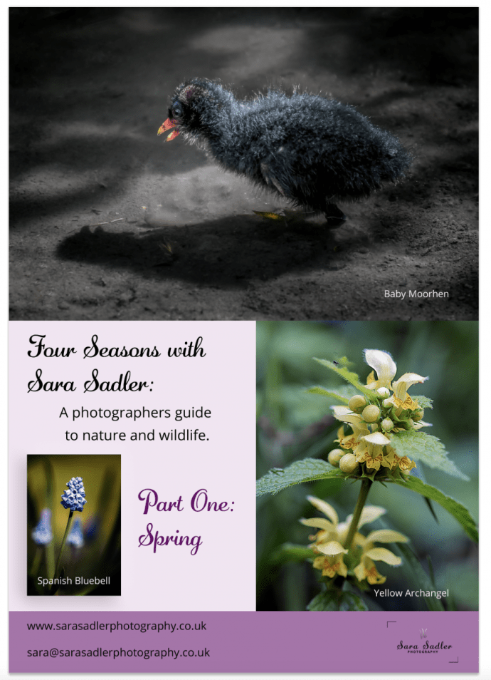 Guide to Spring Nature Photography