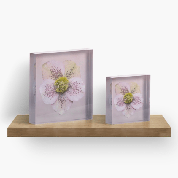 Hellebores flower Acrylic Block