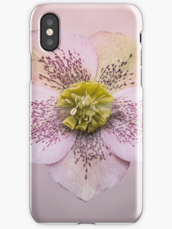 Hellebores Flower iphone cases