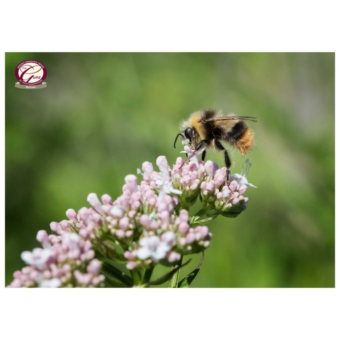 Bee gathering nectar wins bronze award