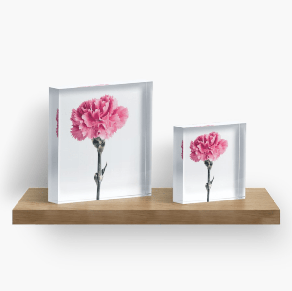 Carnation flower Acrylic Block