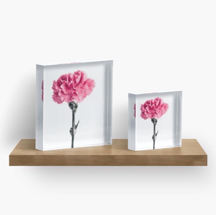 Carnation flower Acrylic Block