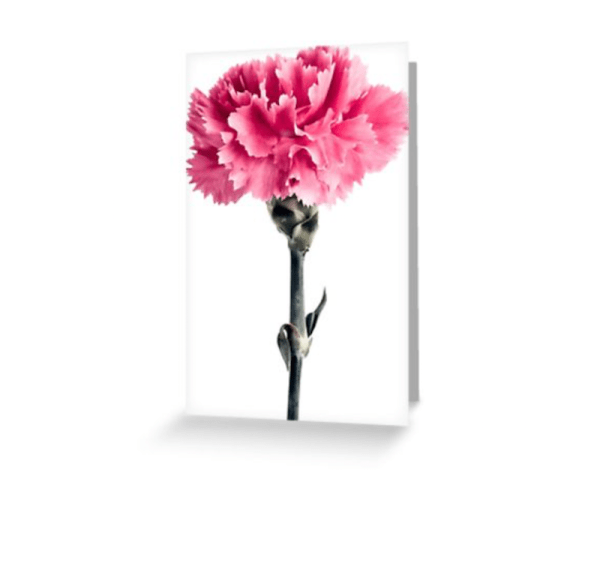 Carnation Flower Cards