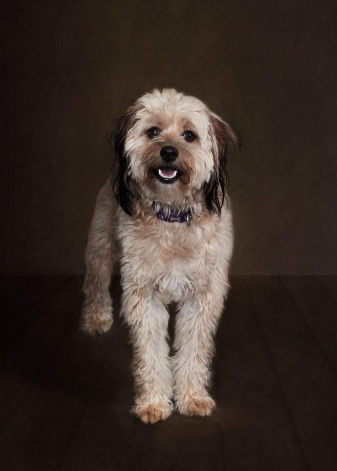looking back on 2018 - dog portrait
