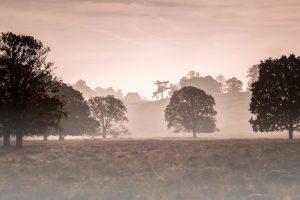 Inspirational autumn - misty morning