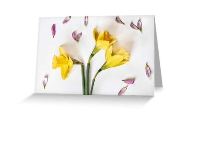 Spring flower photography daffodil card