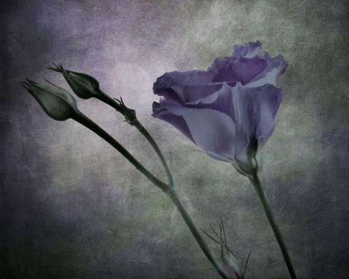 Floral art images in Littlehampton Arts Trail