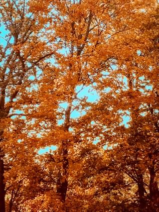 Guld utanför mitt fönster