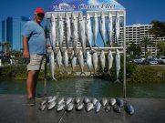 sarasota-charter-fishing-pictures-8